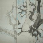 up in the beech branches sketch book